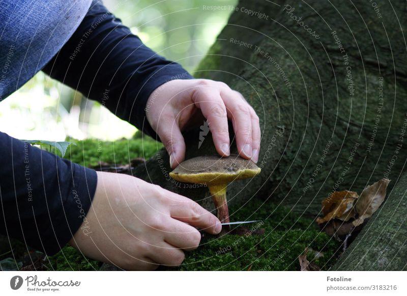 Ernte Mensch feminin Kind Mädchen Kindheit Haut Arme Hand Finger 1 Umwelt Natur Landschaft Pflanze Urelemente Erde Herbst Schönes Wetter Baum Moos Wald nah