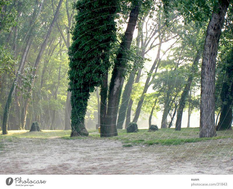Wald im Nebel grün ruhig Stimmung
