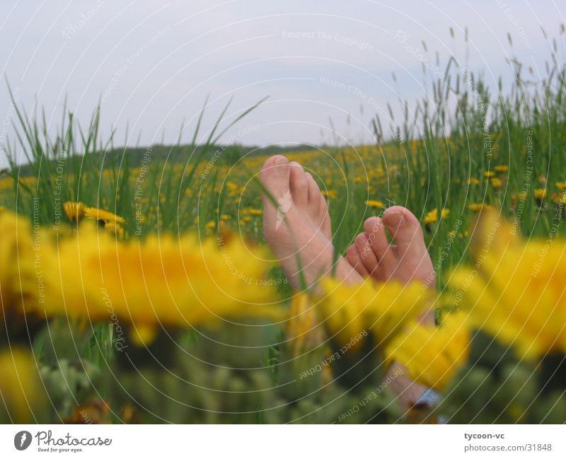 Löwenzeh'n Blume Wiese Pause Zehen Löwenzahn ruhig schlafen Erholung Fuß liegen Barfuß