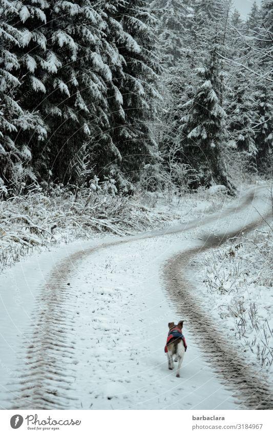 Winterlicher Morgenspaziergang mit Hund Natur weiß Landschaft Tier ruhig Freude Wald Ferne Straße Umwelt kalt Wege & Pfade Schnee klein