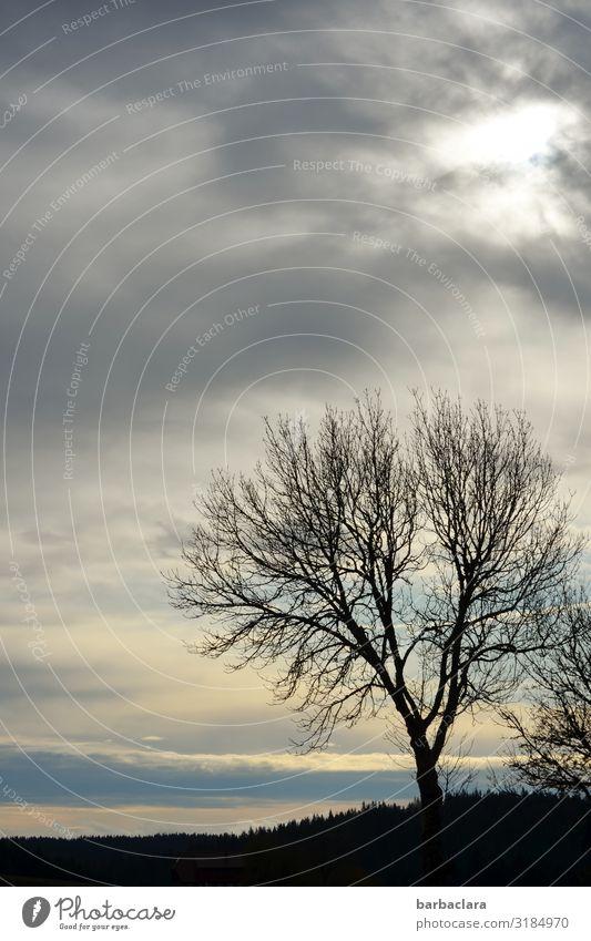 Ein kalter Novembermorgen Himmel Natur Landschaft Baum ruhig Wald Ferne Herbst Umwelt Stimmung Horizont Erde Luft ästhetisch Klima