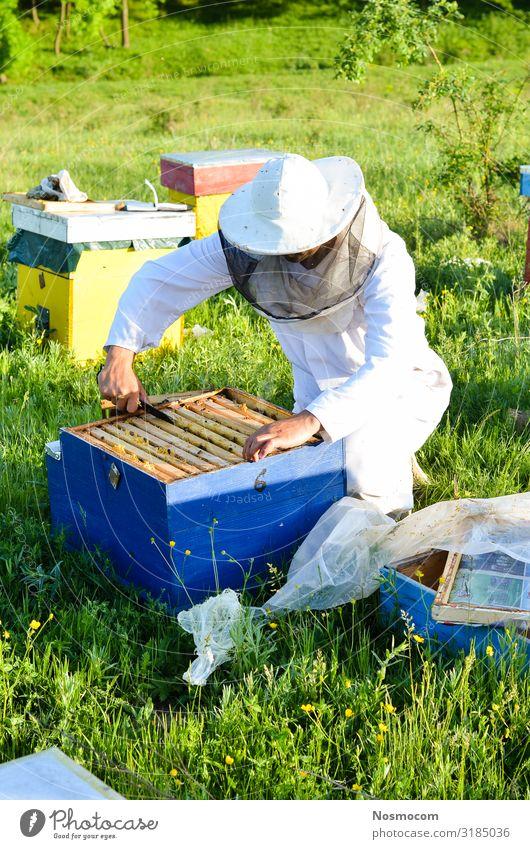 Mann Imker, der ihre Bienenkästen inspiziert. Lebensmittel Gemüse Süßwaren Design schön Sommer Garten Arbeit & Erwerbstätigkeit Beruf Gartenarbeit