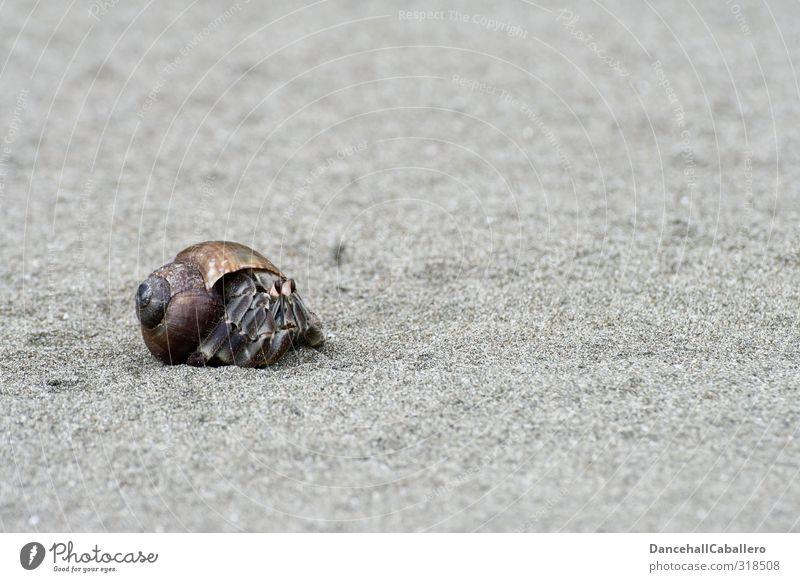 Trautes Heim, Glück allein! Natur Meer Einsamkeit Tier Strand Haus Umwelt Leben Bewegung Küste Sand außergewöhnlich Wohnung Zufriedenheit laufen