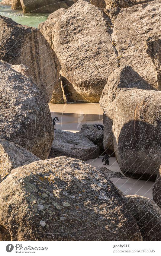 Wo müssen wir hin??? Ferien & Urlaub & Reisen Ausflug Abenteuer Safari Expedition Sonne Strand Meer Umwelt Natur Sand Wasser Sonnenlicht Felsen Küste Südafrika