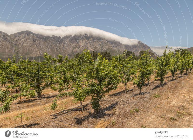 Wein aus Südafrika Ferien & Urlaub & Reisen Tourismus Ausflug Abenteuer Ferne Freiheit Expedition Umwelt Natur Landschaft Erde Himmel Wolken Horizont