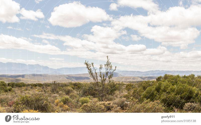 Das Hinterland Südafrika's Ferien & Urlaub & Reisen Tourismus Ausflug Abenteuer Ferne Freiheit Safari Expedition Umwelt Natur Landschaft Pflanze Tier Erde