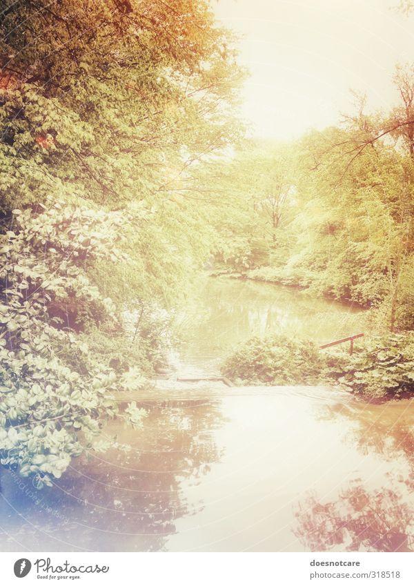 Fluss in sommerlicher Parklandschaft Umwelt Natur Wald gold Baum Pflanze Licht Farbfoto Gedeckte Farben Außenaufnahme Menschenleer Tag Reflexion & Spiegelung