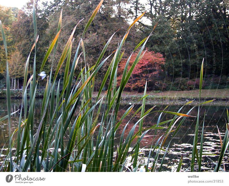 blick durchs schilf Wasser See Park Küste Schilfrohr