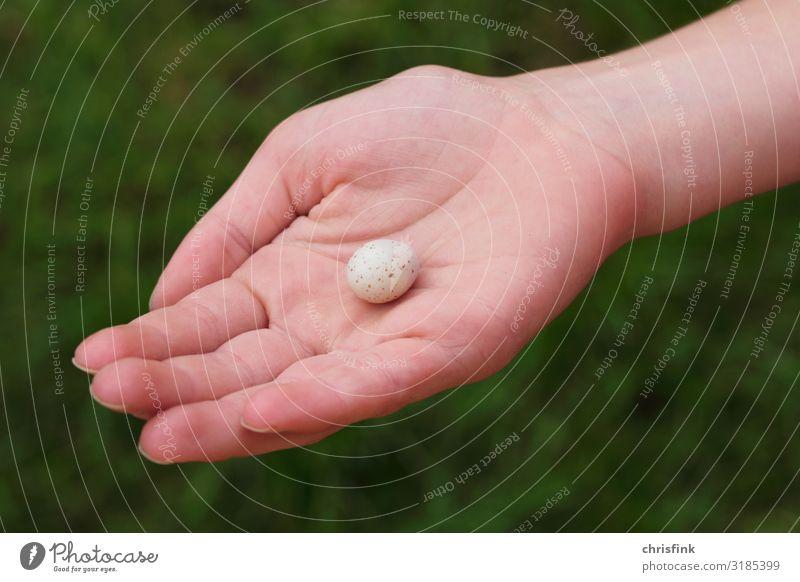 Ei von Meise in Kinderhand feminin Hand Finger 1 Mensch Umwelt Natur Tier Wildtier Vogel gut Vertrauen Warmherzigkeit Tierliebe Sorge Tod Meisen Kohlmeise