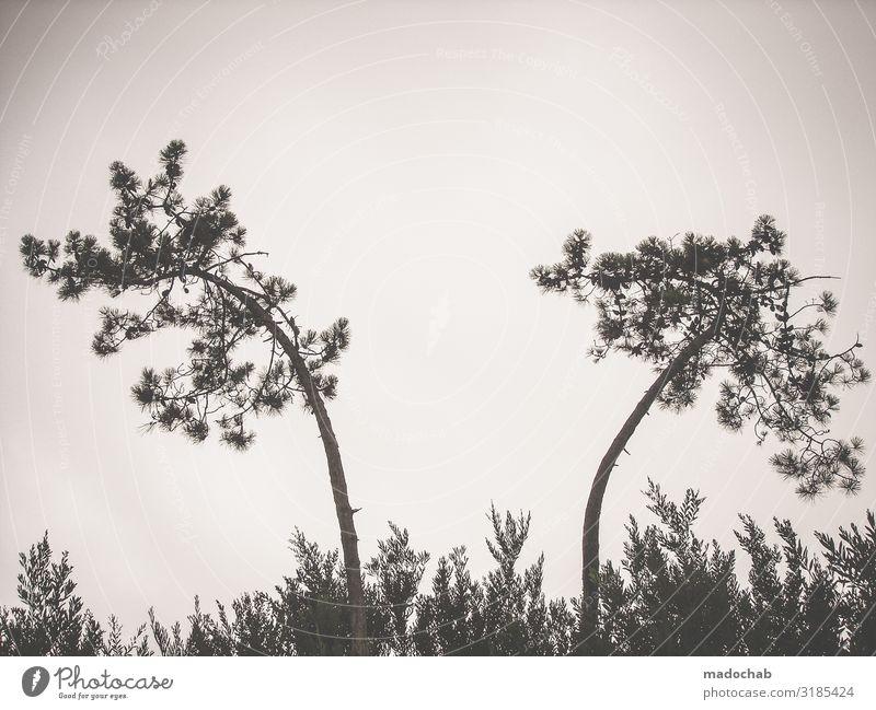 1800 Natur Pflanze schön Landschaft Baum ruhig Umwelt Gefühle Stimmung Zufriedenheit ästhetisch Idylle Sträucher Romantik Sehnsucht Partnerschaft
