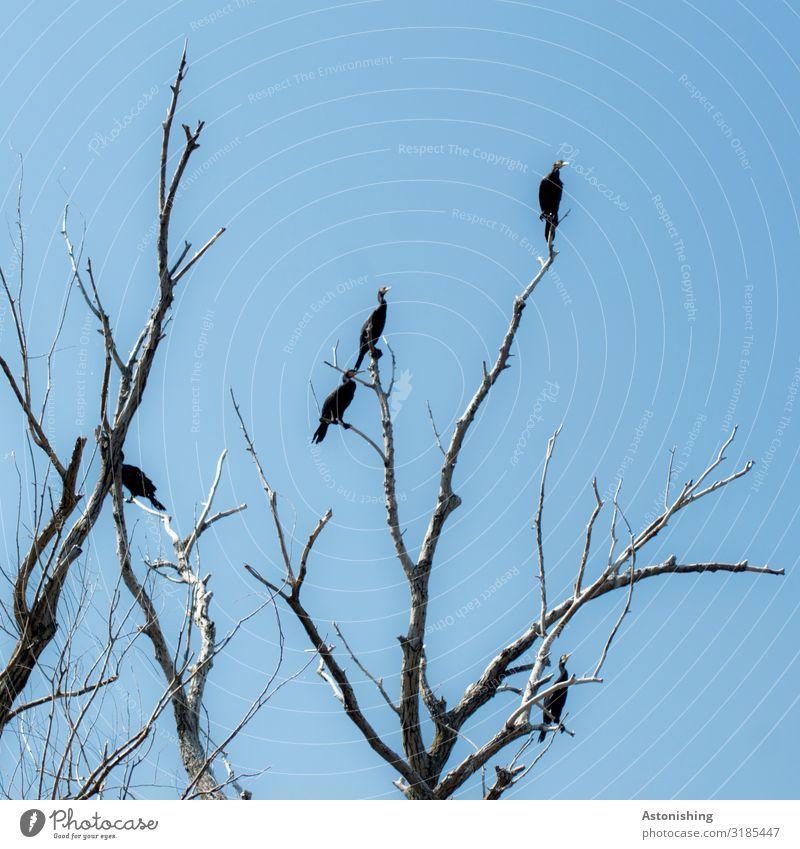 die Vögel Himmel Natur Pflanze blau Landschaft Baum Tier dunkel schwarz Holz Umwelt Vogel Feld Wetter Wildtier sitzen