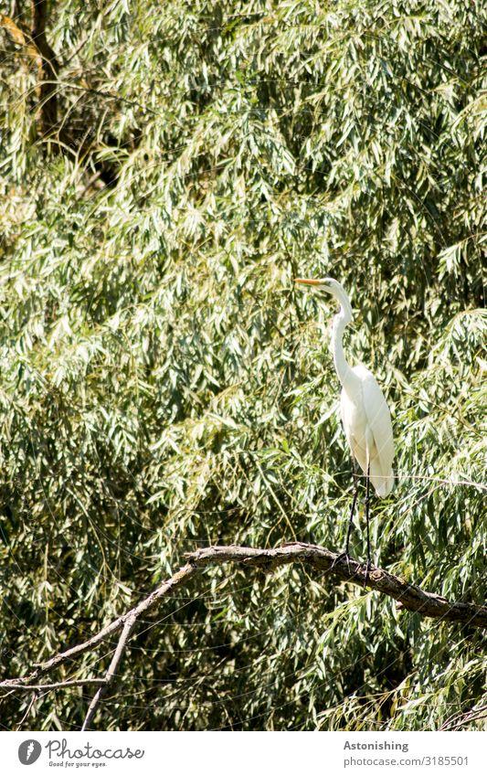 Reiher Natur Sommer Pflanze grün weiß Landschaft Baum Tier Blatt Wald Reisefotografie Umwelt Beine Vogel sitzen Sträucher
