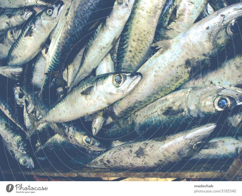 Große Augen machen Lebensmittel Fisch Meeresfrüchte Ernährung Tier Nutztier Totes Tier Schuppen Tiergruppe Herde Schwarm Rudel frisch kaufen Tod Farbfoto