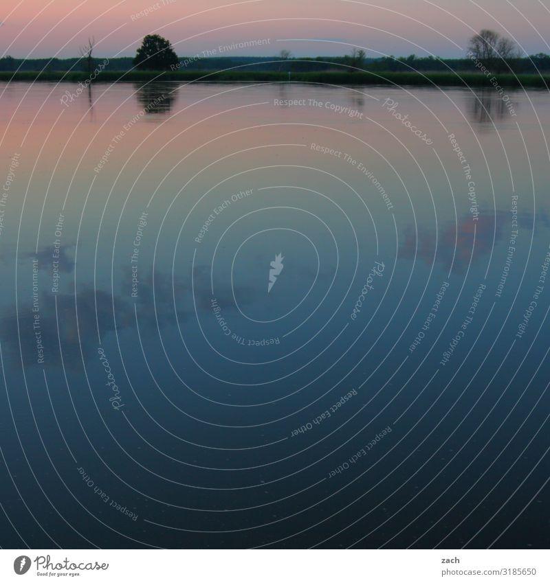 Still ruht der See Landschaft Wasser Horizont Sonnenaufgang Sonnenuntergang Schönes Wetter Pflanze Küste Seeufer Flussufer Oder blau rosa Farbfoto Außenaufnahme