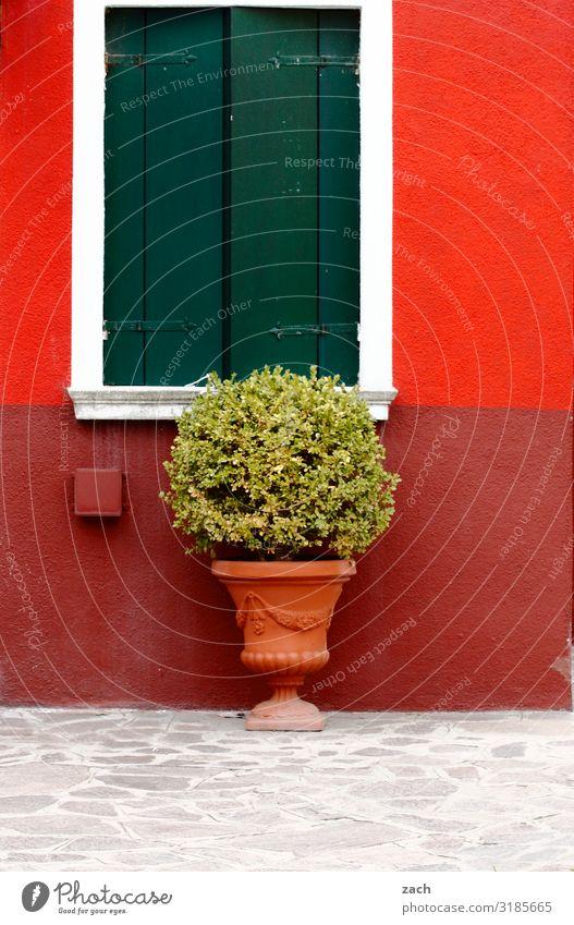 Burano Pflanze rot Haus Fenster Wand Mauer Fassade Sträucher Italien Dorf Stadtzentrum Venedig Nutzpflanze Fensterladen Topfpflanze Fischerdorf