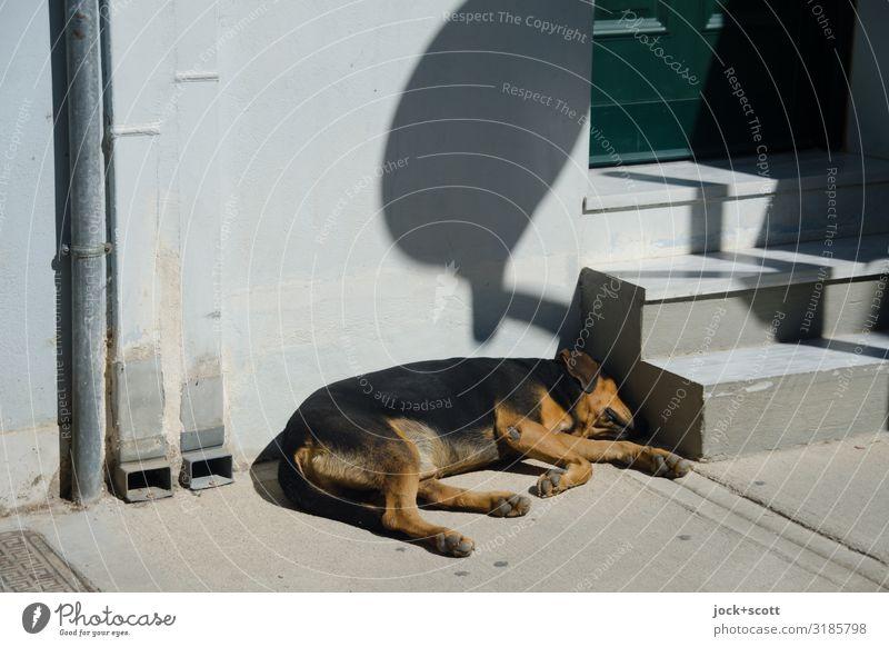 Hundeleben, einfach faulenzen Sommer Wand Treppe Hauseingang Bürgersteig Haustier 1 Regenrohr liegen schlafen authentisch unten Wärme grau Erholung Inspiration