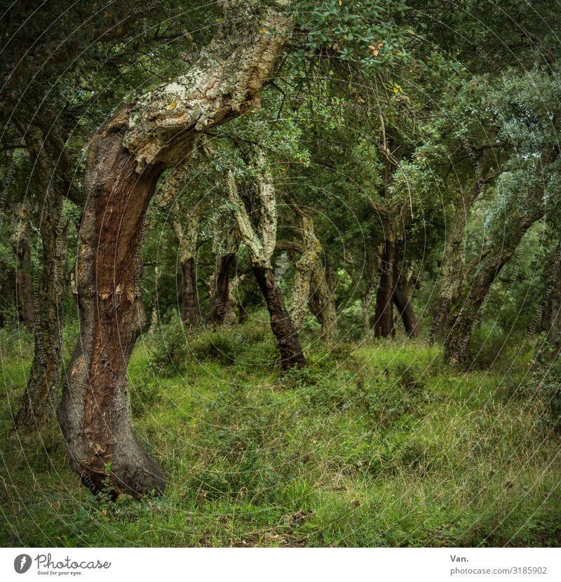 Märchenwald Natur Landschaft Sommer Pflanze Baum Gras Sträucher Moos Wald dunkel grün Blatt Baumstamm Farbfoto Gedeckte Farben Außenaufnahme Menschenleer Tag
