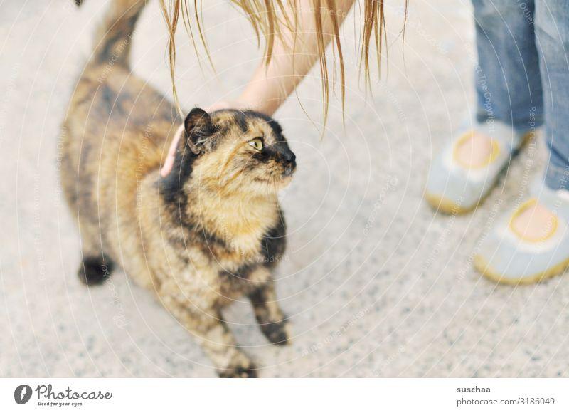 katze streicheln (2) Kind Mädchen Katze Hauskatze Tier Haustier Streicheln Tierliebe Zuneigung niedlich genießen berühren Fell Haare & Frisuren Fuß Schnurren