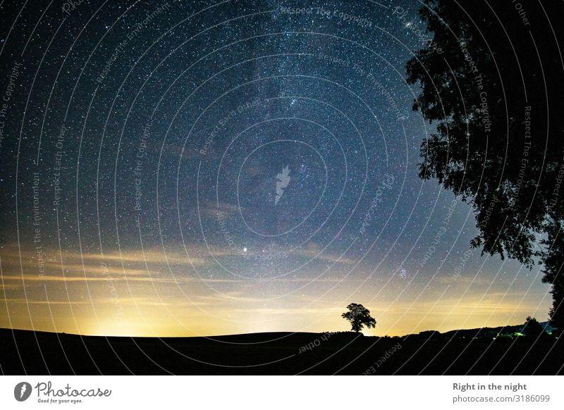 Into the Night Natur Landschaft Himmel Wolkenloser Himmel Nachthimmel Stern Horizont Sommer Baum Feld ästhetisch Zufriedenheit einzigartig Frieden geheimnisvoll