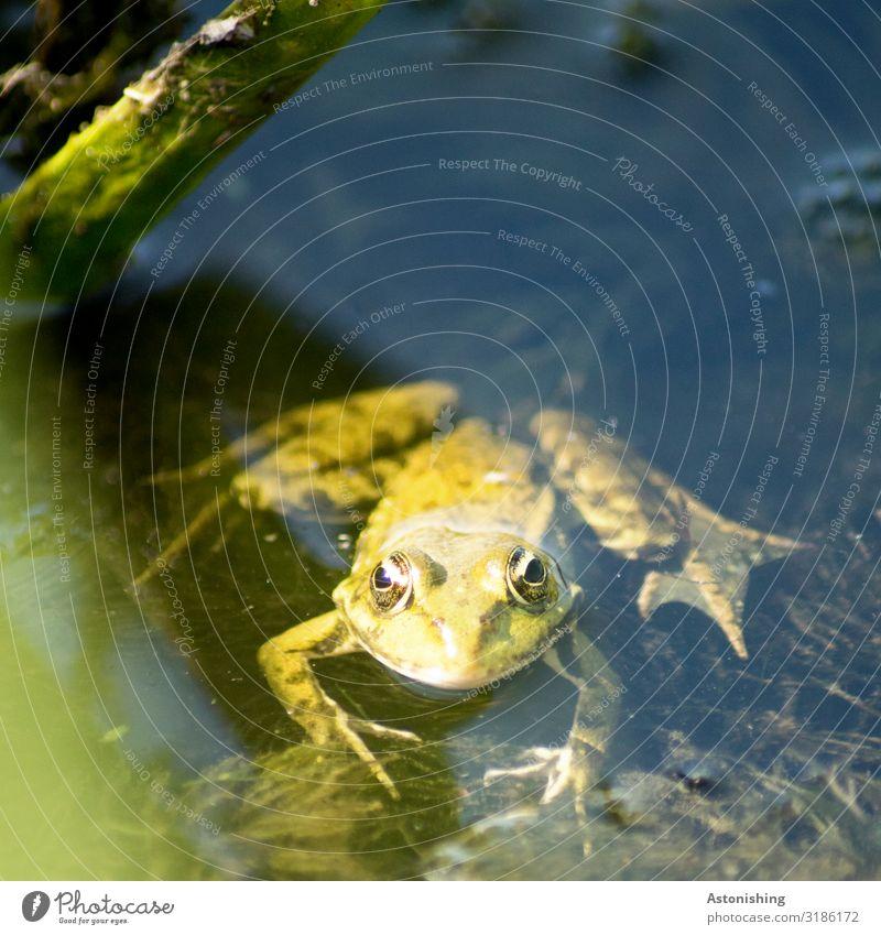 """""""quak"""" Natur Sommer Pflanze grün Wasser Landschaft Tier schwarz Umwelt Auge Beine See Schwimmen & Baden Wildtier nass Fluss"""