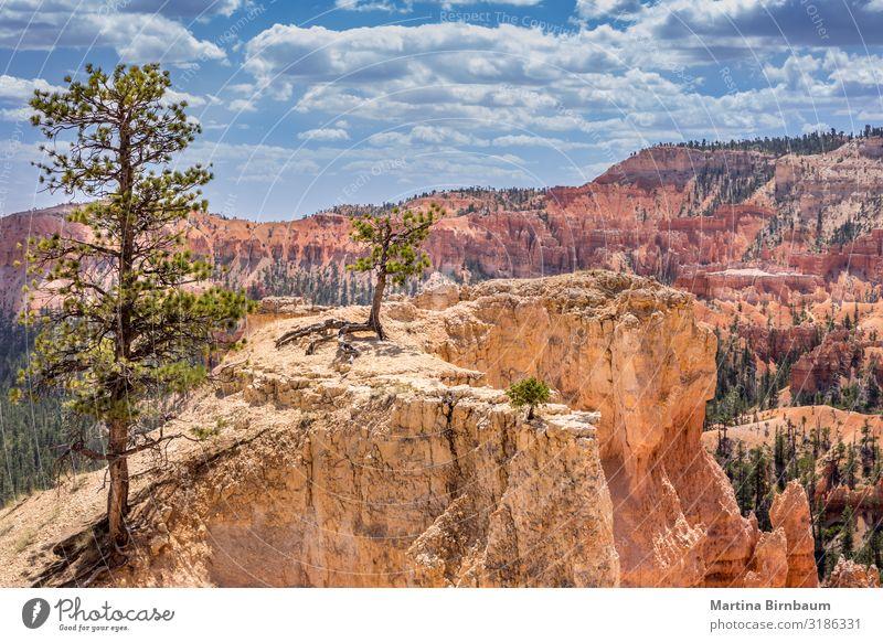 Blick auf die Landschaft mit Bäumen, Bryce Canyon Utah USA Ferien & Urlaub & Reisen Berge u. Gebirge Natur Himmel Baum Park Felsen Schlucht Denkmal Stein gold