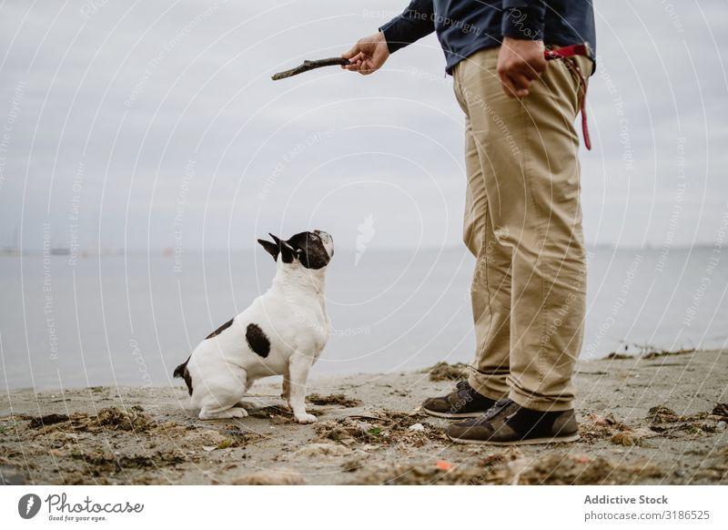 Getreidemann spielt mit Hund am Strand Mann Spielen Stock Meer Sand stehen Haustier französische Bulldogge Besitzer Freude Tier Natur Wasser Freundschaft