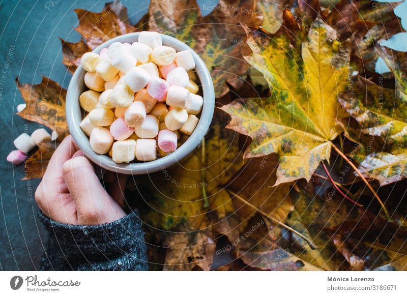 Frau hält einen Becher mit heißer Schokolade und Marshmallows in der Hand. Getränk Kaffee Tee Winter Tisch Herbst Wärme Blatt Beton Holz Liebe braun gelb grau