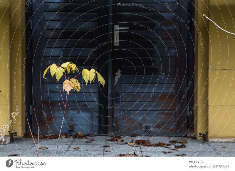 kehr mal wieder Sträucher Blatt Mauer Wand Tür Tor Eingang Ausgang alt dreckig gelb Verfall Vergänglichkeit Häusliches Leben Zeit Altbau kaputt Farbfoto