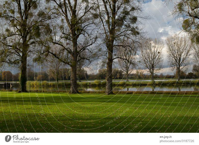 am Rhein Ferien & Urlaub & Reisen Umwelt Natur Landschaft Himmel Herbst Schönes Wetter Baum Mistelgewächse Park Wiese See Fluss grün Erholung Idylle Spazierweg