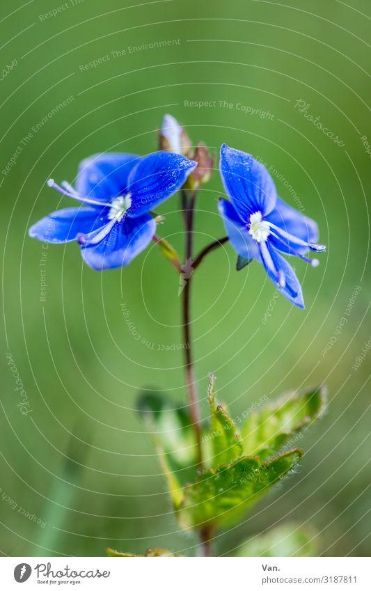 grün-blau Natur Pflanze Sommer Blume Blatt Blüte Garten Wiese Farbfoto mehrfarbig Außenaufnahme Nahaufnahme Makroaufnahme Hintergrund neutral Tag