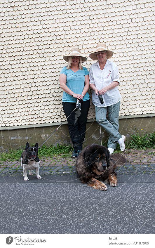 Vorsicht scharf l oder auch nicht? Tier Haustier Hund Freude Glück Fröhlichkeit Zufriedenheit Lebensfreude Hundeleine Farbfoto Außenaufnahme