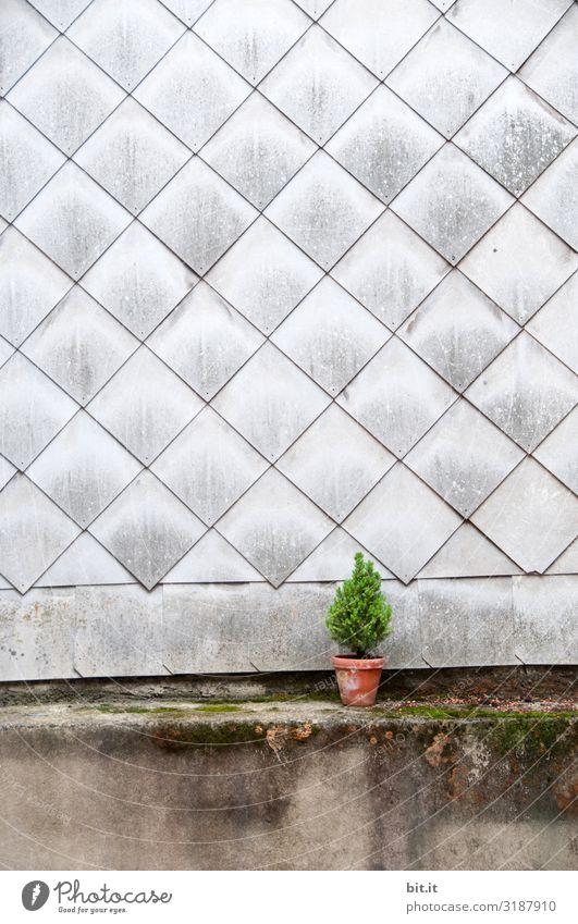Frohe Weinachtchen Weihnachten & Advent Wand Feste & Feiern klein Mauer Fassade Weihnachtsbaum Weihnachtsdekoration