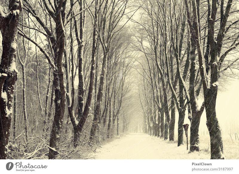 Winter im Wald Ferien & Urlaub & Reisen Tourismus Ausflug Kunst Umwelt Natur Landschaft Pflanze Baum Wildpflanze verblüht Wachstum schön schwarz weiß Gefühle