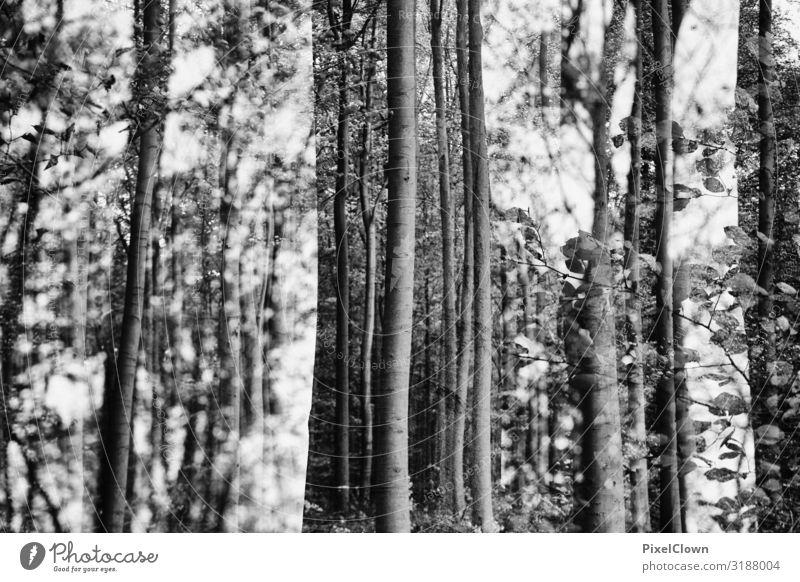 Wald und Wald Ferien & Urlaub & Reisen Tourismus Ausflug Umwelt Natur Landschaft Pflanze Tier Baum Wachstum schön trashig schwarz Stimmung träumen