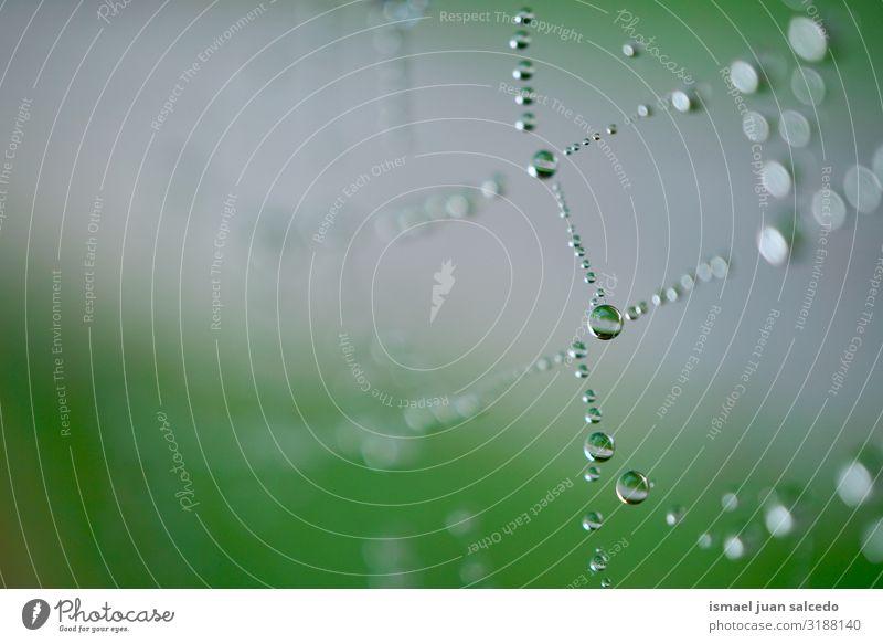 Regentropfen auf dem Spinnennetz im Herbst Internet Tennisnetz Natur Tropfen hell glänzend Außenaufnahme abstrakt Konsistenz Hintergrund neutral Wasser