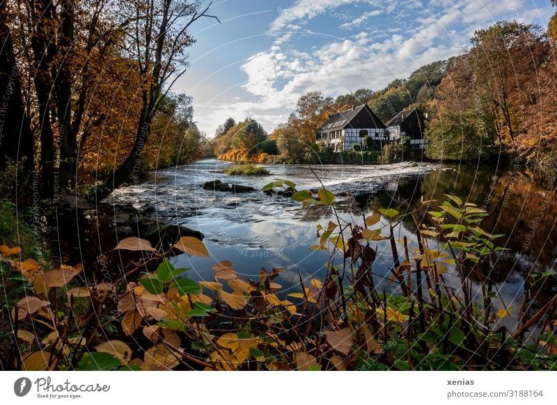 Wipperkotten mit Wupper im Herbst Ferien & Urlaub & Reisen Natur Landschaft Himmel Schönes Wetter Baum Springkraut Fluss Solingen Leichlingen Deutschland