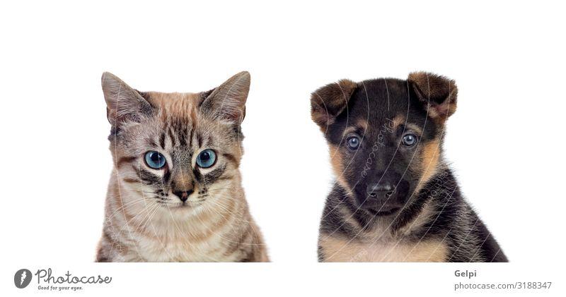 Zwei schöne Haustiere Glück Gesicht Jagd Baby Tier Pelzmantel Hund Katze Tierjunges niedlich braun grau rot weiß Katzenbaby Welpe Säugetier vereinzelt