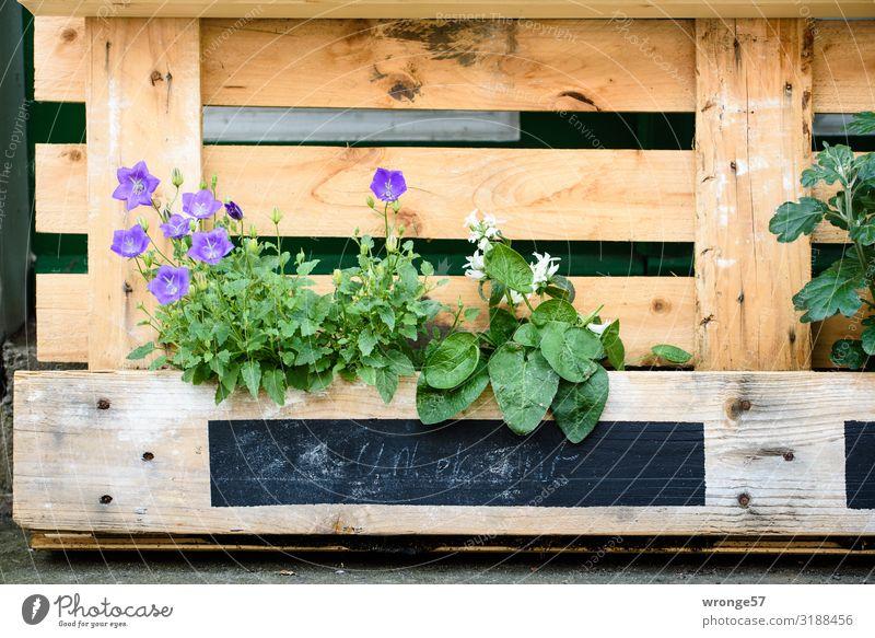 Alternatives Blumenbeet Palette Hochbeet Bepflanzung Sommer Sommerblumen alternativ unkonventionell Grüner Daumen Gestaltung Pflanze grün Farbfoto Außenaufnahme