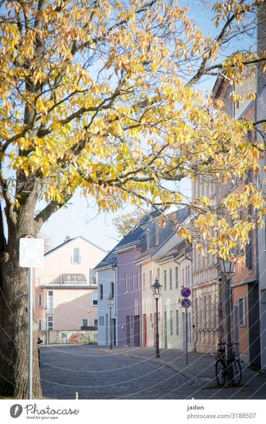 empty streets (3). ruhig Meditation Fahrradfahren Pflanze Schönes Wetter Baum Brandenburg an der Havel Stadt Altstadt Menschenleer Haus Fassade Hinweisschild