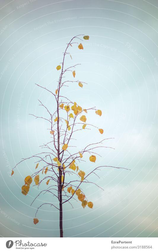 noch was dran Himmel Natur Pflanze blau Baum Wolken Blatt Winter Herbst gelb Umwelt Klima minimalistisch