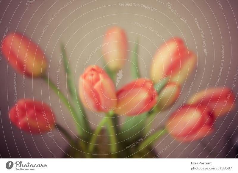 blurry Tulpenstrauß Blumenstrauß Strauß Tulpenblüte Floristik unscharf verschwommen Unschärfe orange grün Blüte Pflanze Frühling