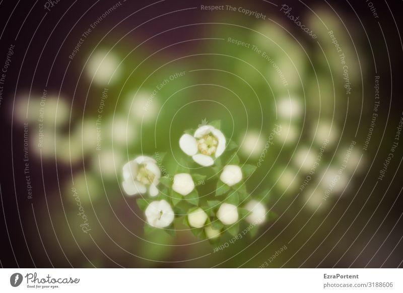:::: Umwelt Natur Klima Pflanze Blume Blüte Wildpflanze Garten Wiese grün schwarz weiß Außenaufnahme Nahaufnahme Menschenleer Textfreiraum rechts