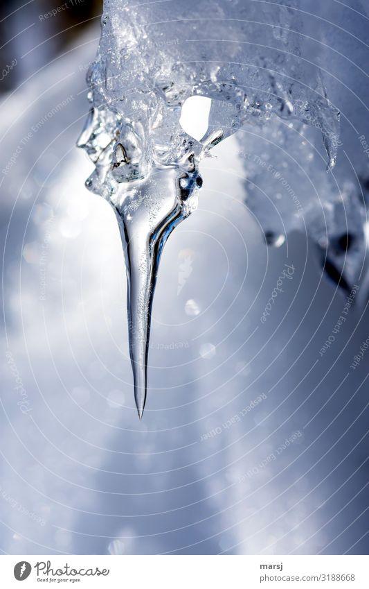 Ganz schön gefährlich Eis Frost Eiszapfen hängen kalt natürlich Kraft gefroren Spitze spitz Farbfoto Gedeckte Farben Außenaufnahme Makroaufnahme Menschenleer