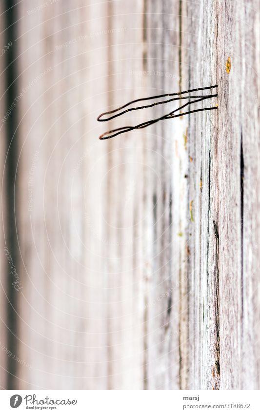 Für was auch immer M-Draht auf Holzwand Maserung dünn authentisch gekrümmt skurril sinnlos nutzlos Farbfoto Gedeckte Farben Makroaufnahme abstrakt Menschenleer