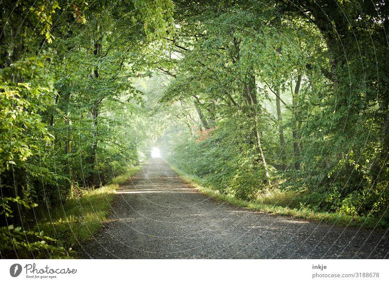 Laufforest Umwelt Natur Landschaft Frühling Sommer Schönes Wetter Baum Wald Deutschland Mischwald Wege & Pfade Fußweg frisch hell natürlich grün Ferne