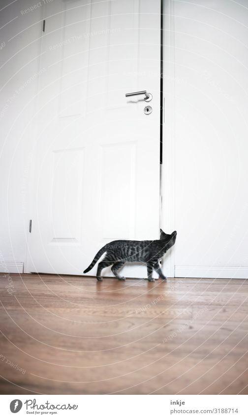 Emmy auf Entdeckungsreise Häusliches Leben Wohnung Raum Zimmertür Tür Holzfußboden Altbauwohnung Menschenleer Haustier Katze 1 Tier Tierjunges beobachten Blick