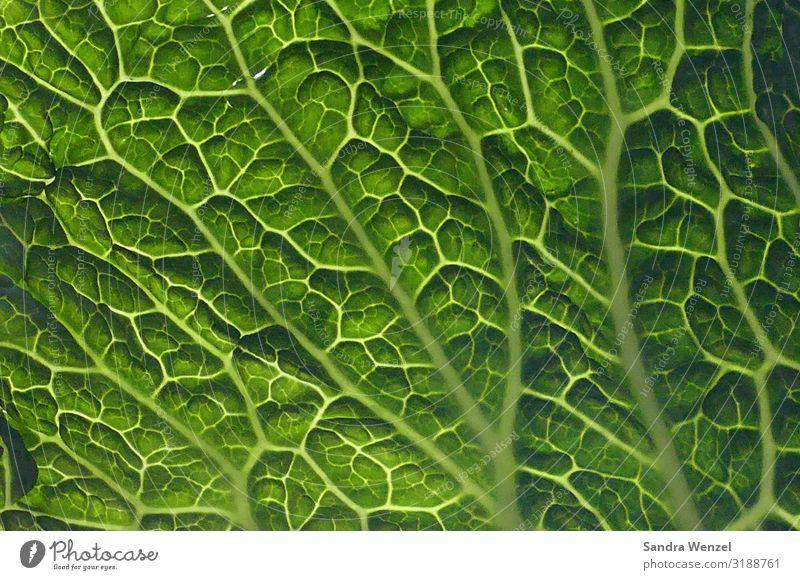 Alles nur Gemüse.. grün Gesundheit Lebensmittel Umwelt Gesundheitswesen Garten Ernährung frisch Mittagessen Kohl Wirsing