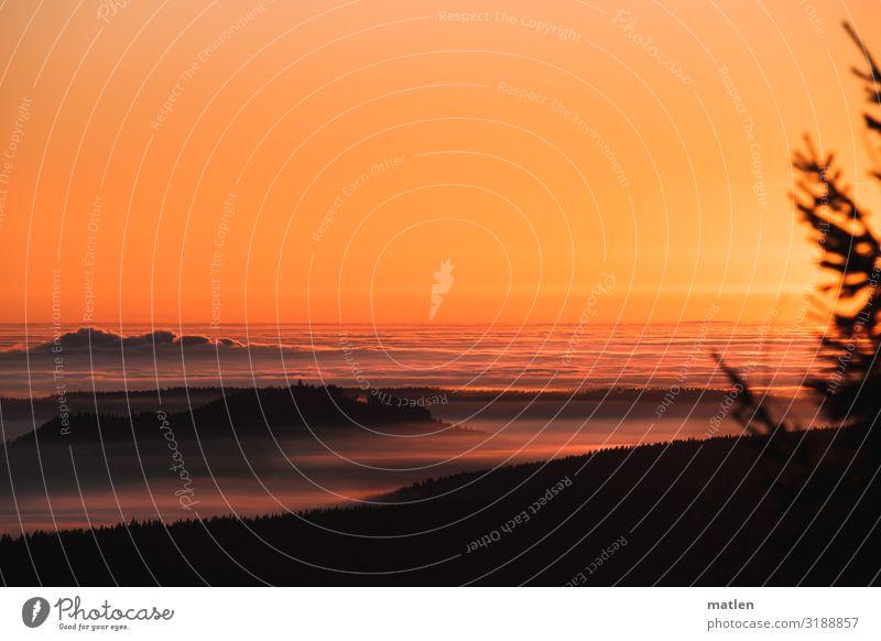 Winterabend Natur Landschaft Pflanze Himmel Wolken Horizont Sonnenaufgang Sonnenuntergang Schönes Wetter Baum Berge u. Gebirge Gipfel dunkel blau braun orange