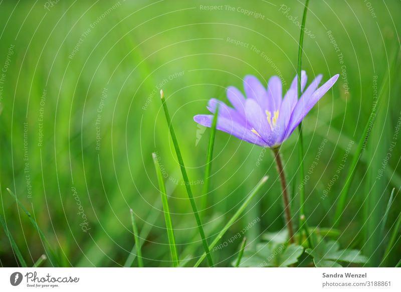 Wegewarte Natur Sommer Pflanze blau schön Landschaft Blume Umwelt Frühling Wiese Garten Park Feld violett Umweltschutz