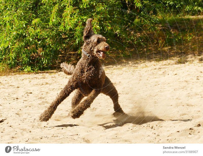 Gustav Hund Tier Freude Bewegung Stimmung Zufriedenheit Kraft Fröhlichkeit Lebensfreude Fitness Haustier Vertrauen rennen Sport-Training drehen Tierliebe
